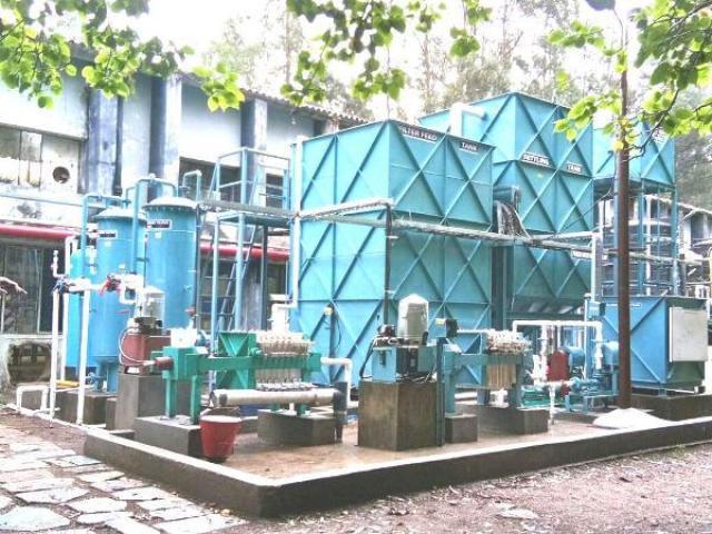 Home Reared Ragdoll Kittens - 1